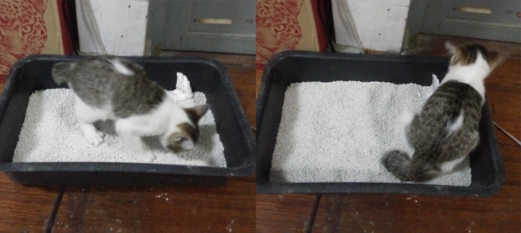 cat_poop